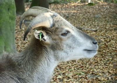 Tiergehege Zeulenroda